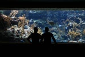 ᐅ Aquarium Fische 2018 | Aquarium | Wissenswertes + NEU