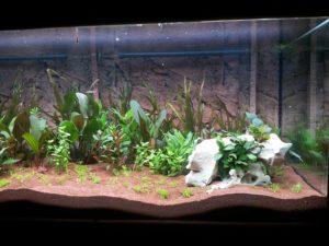 Aquarium Becken