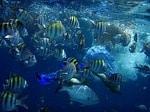 Minifische